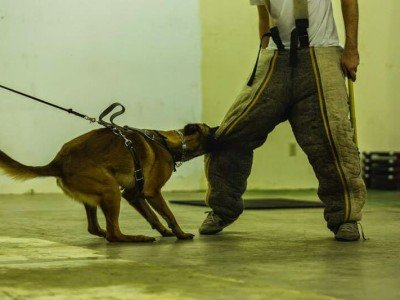 dog attack training